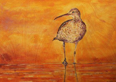 Vancouver Bird
